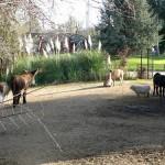 zoo du jardin d'acclimation