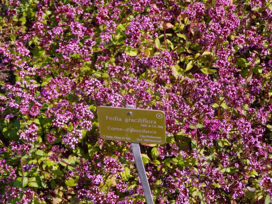 corne dabondance jardin des plantes