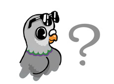 Question Pigeon 2