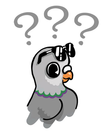 Question-Pigeon