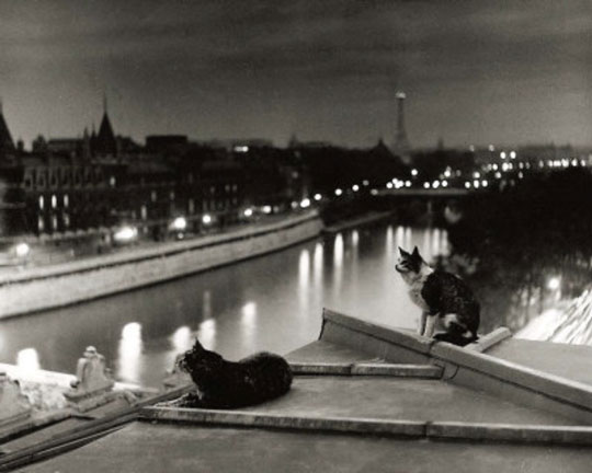 cats on the roof 1954