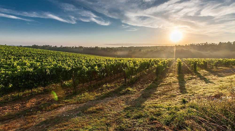 histoire vin paris