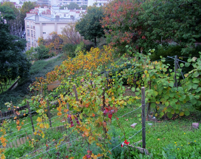 vigne butte bergeyre
