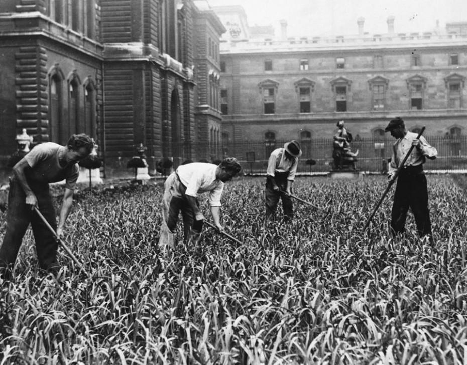 plantation poireaux louvre