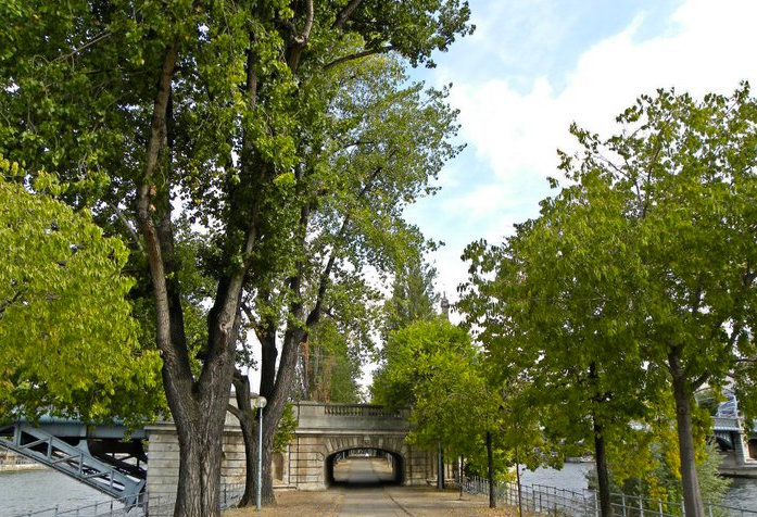 allee des cygnes arbres remarquables