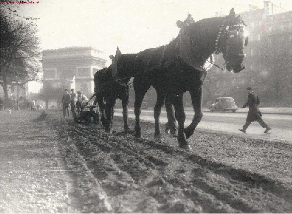 Labourage avec un cheval sur l'avenue Foch à Paris, 1933