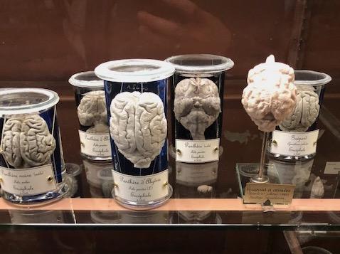 galerie anatomie musee paris