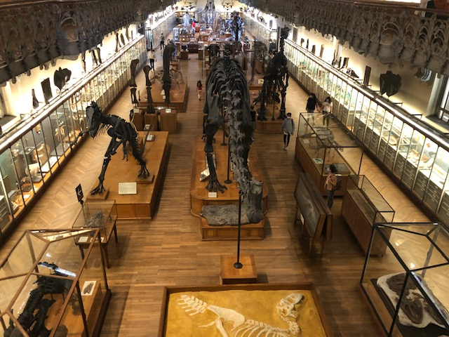 galerie de Paleontologie paris